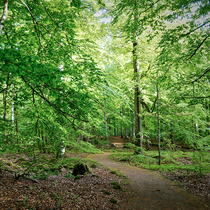 Hiking through Åsnen's leafy halls - 9 km