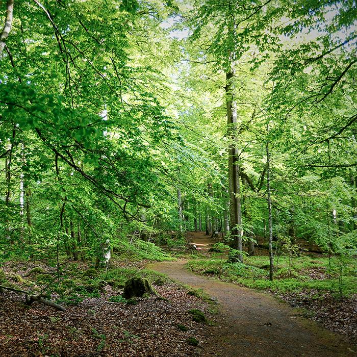 Wanderung in den Laubsälen des Åsnen - 9 km